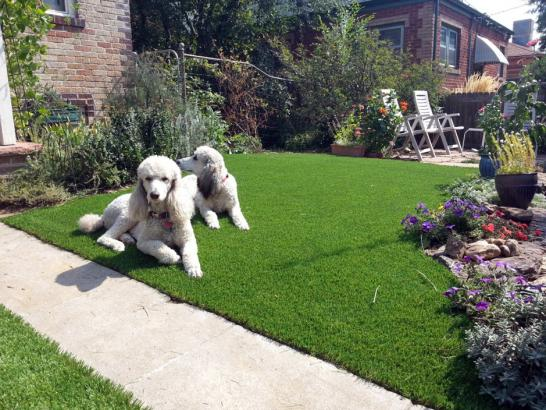 Artificial Grass Photos: Artificial Lawn Todd Mission, Texas Landscape Ideas, Front Yard Landscaping