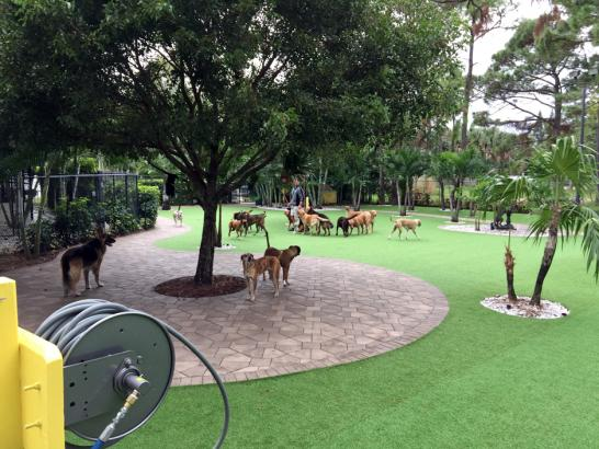 Artificial Grass Photos: Fake Turf Hackberry, Texas Hotel For Dogs, Commercial Landscape