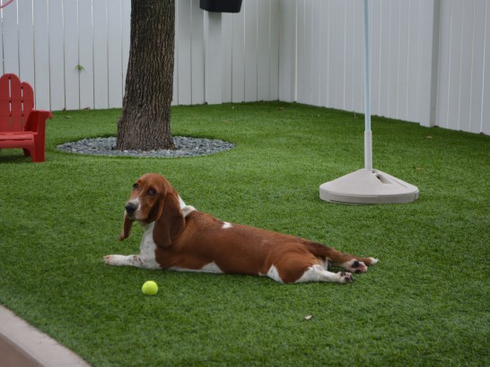 Artificial Grass Photos: Grass Installation Belton, Texas Dog Hospital,  Dog Kennels