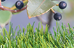 Artificial Grass Olive Series